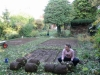 suburban-garden-makeover-in-prog-030