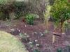 suburban-garden-makeover-in-prog-160