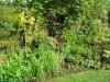 suburban-garden-makeover-in-prog-190