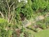 suburban-garden-makeover-maturing-030