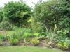 suburban-garden-makeover-maturing-050