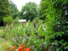 suburban-garden-makeover-maturing-080