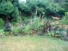 suburban-garden-makeover-maturing-090