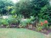 suburban-garden-makeover-maturing-100