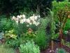 suburban-garden-makeover-maturing-110