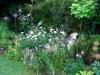 suburban-garden-makeover-maturing-120