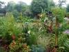 suburban-garden-makeover-maturing-140
