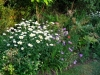 suburban-garden-makeover-maturing-170