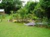 suburban-garden-makeover-maturing-190