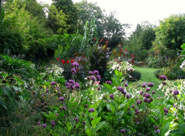 suburban garden makeover: the mature garden 100