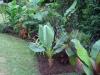 suburban-garden-makeover-mature-010