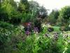 suburban-garden-makeover-mature-100
