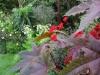 suburban-garden-makeover-mature-110