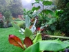suburban-garden-makeover-mature-130