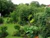suburban-garden-makeover-mature-160