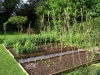 suburban-garden-makeover-vegetable-f