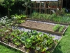 suburban-garden-makeover-vegetable-h