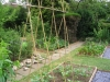 suburban-garden-makeover-vegetable-k