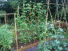 suburban-garden-makeover-vegetable-l