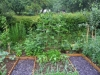 suburban-garden-makeover-vegetable-m