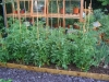 suburban-garden-makeover-vegetable-n