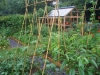 suburban-garden-makeover-vegetable-o