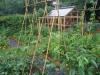 suburban-garden-makeover-vegetable-o