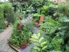 urban-garden-transformation-h