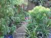 urban-garden-transformation-p