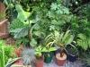 urban-garden-transformation-r