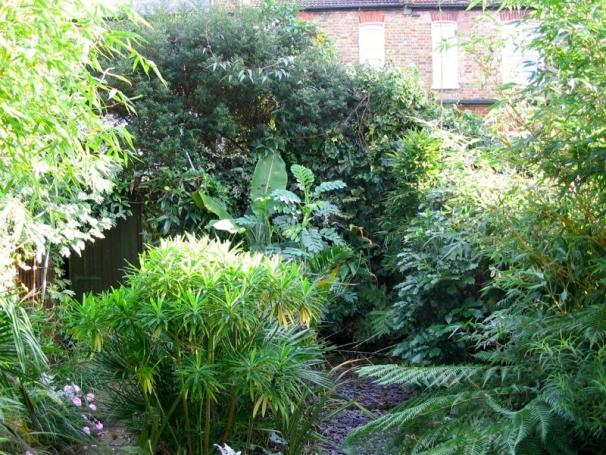 My Urban Garden Transformation Small Space Big Plants
