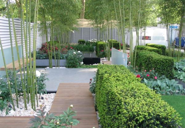 How to grow bamboo: modern garden setting
