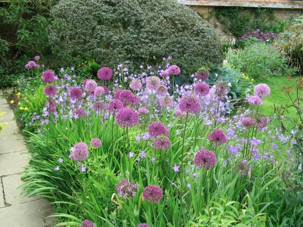 How Do Plants Grow Becoming A Gardener Step 1