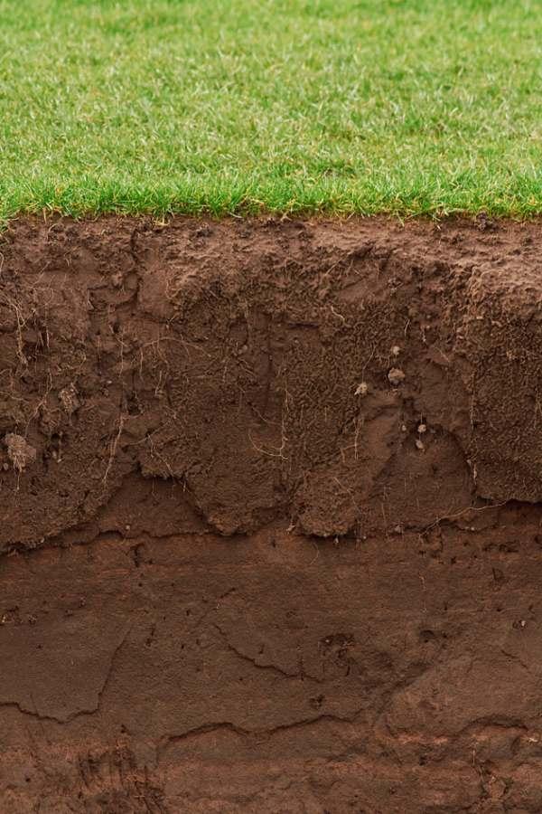 Garden soil horizon