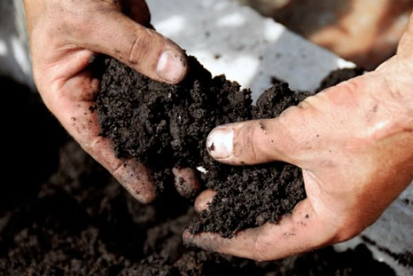 Soil texture analysis: what kind of soil do you have?