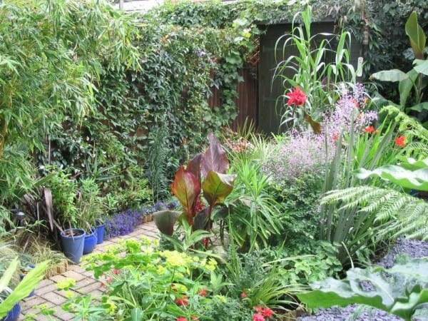 Urban garden transformation: small space, big plants … and lots of them