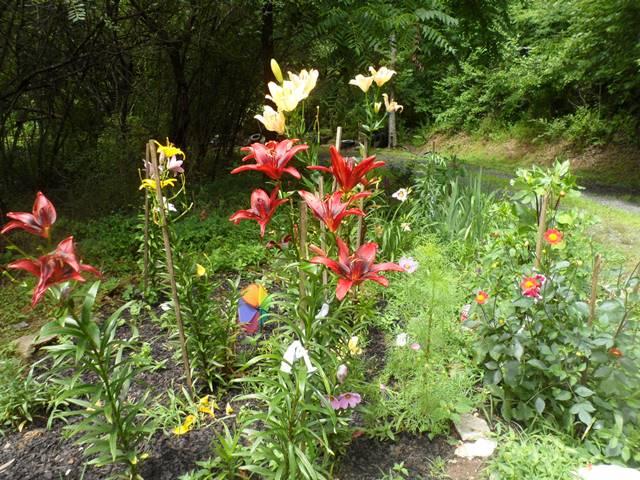 Lilies and dahlias