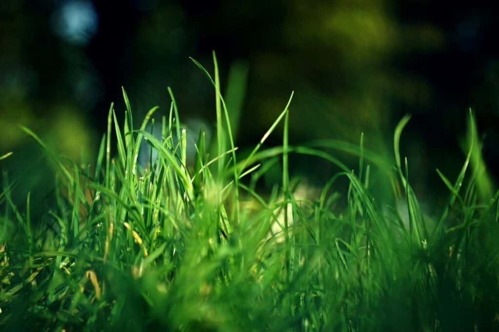 best lawn mower- grass