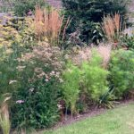 temperature and plants - Cosmos not flowering